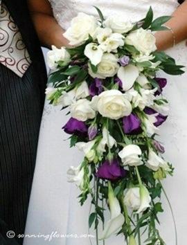 Gelin Çiçeği İzmir