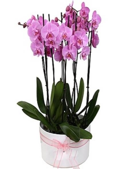 8 Dal Orkide Bahçesi