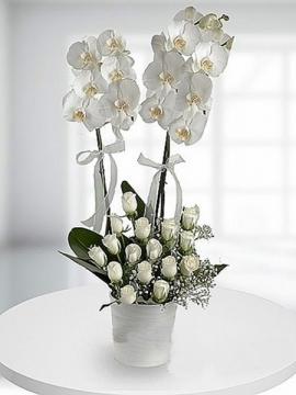 Beyaz Orkide ve 15 Gül