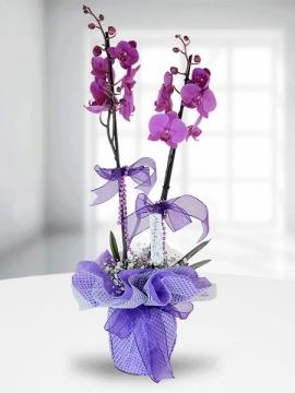 Fuşya Orkide Sepeti İzmir Çiçekse