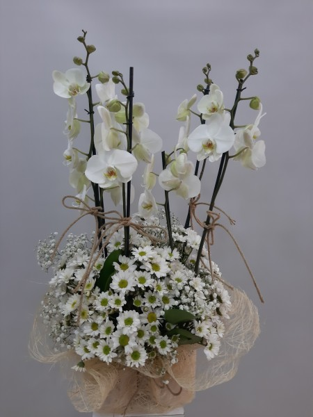 4lü Orkide Papatya Çiçeği Sepeti