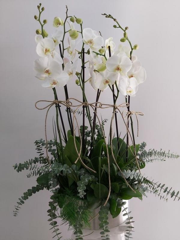 Saksıda 6 Dal Orkide