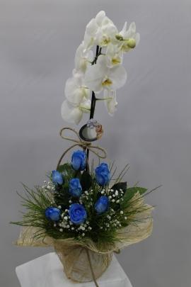 Beyaz Orkide ve Mavi Güller
