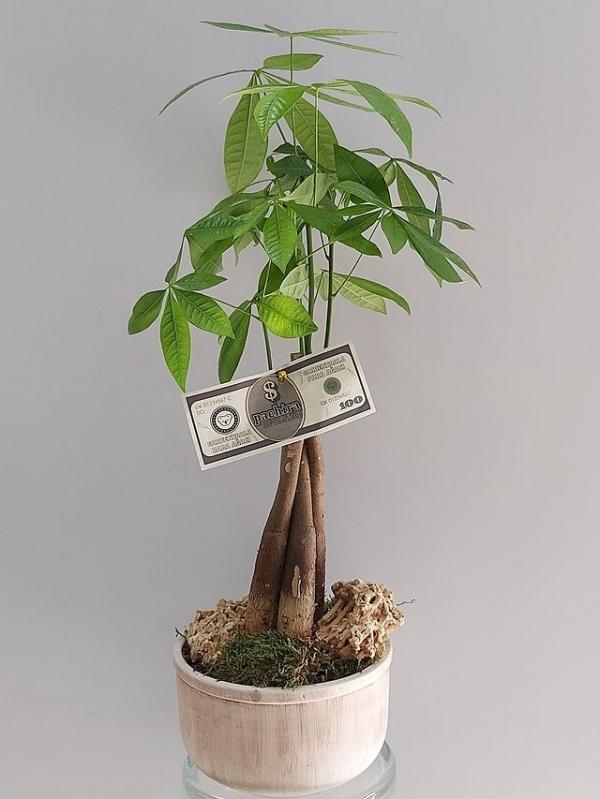 Para Çiçeği Özel Seramikte