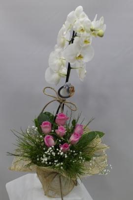 Pembe Gül Beyaz Orkide