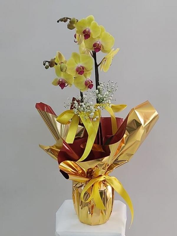 Sarı Orkide Özel Ambalajlı