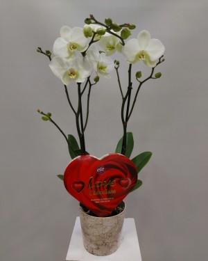 Orkide Kalp Çikolata