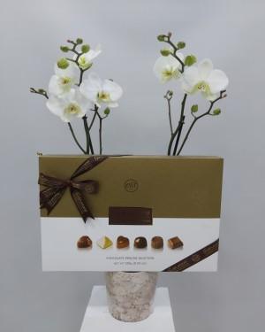 Orkide ve Çikolata