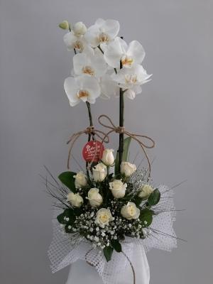 Orkide ve 10 Beyaz Gül