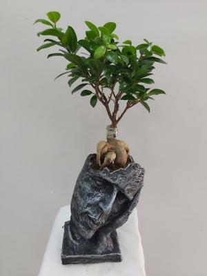 Otantik Vazoda Bonsai Ağacı